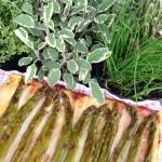 torta salata rovesciata agli asparagi
