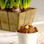 crema al cioccolato vegan e senza cottura